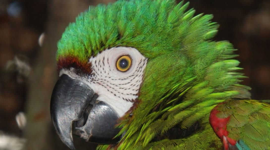 Hjälp rädda regnskogen i Peru på vårt prisbelönta projekt i Amazonas regnskog.